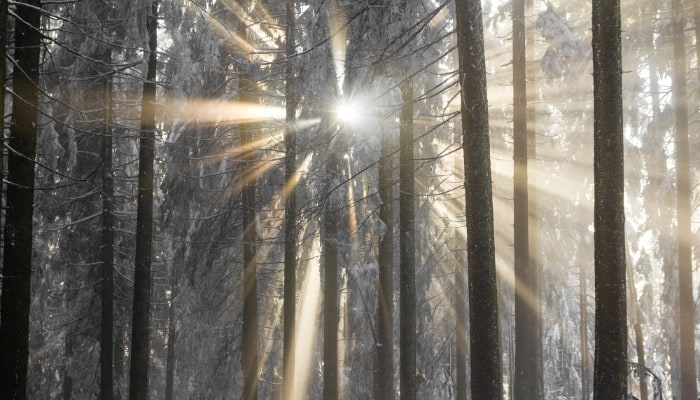 Winter sunrise through forest